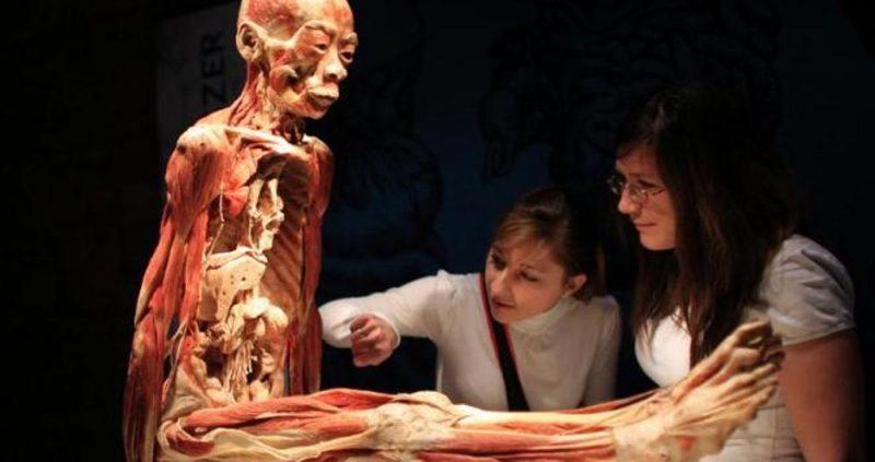 memahami pegertian anatomi manusia