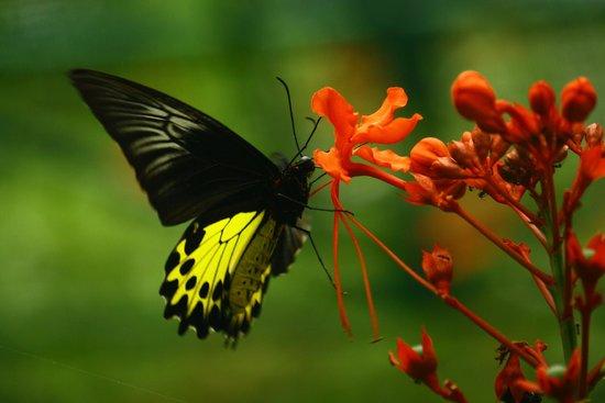 kupu kupu dan bunga