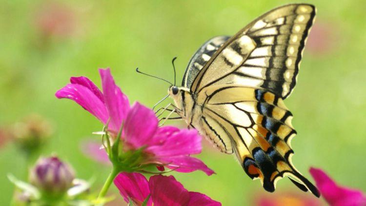 kupu kupu indah