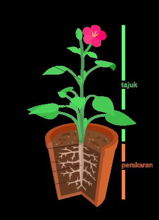 morfologi bunga