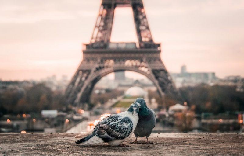 burung merpati di paris